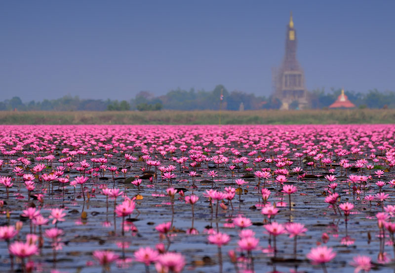 Nong Han Lake, Udon Thani JUNE