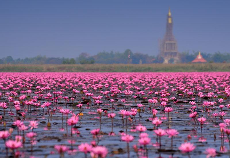 Nong Han Lake, Udon Thani JUNE